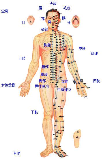 手桡骨部位图解